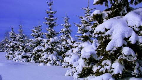 Саратовцам обещают слабый снег и до 12 градусов мороза