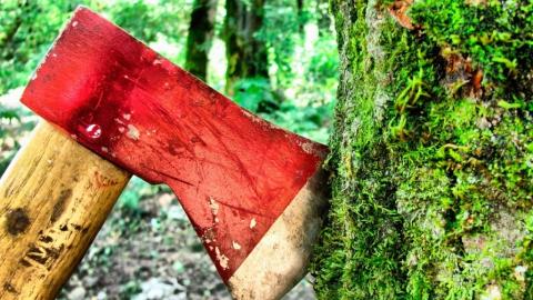 Под Саратовом лесоруба насмерть придавило дерево