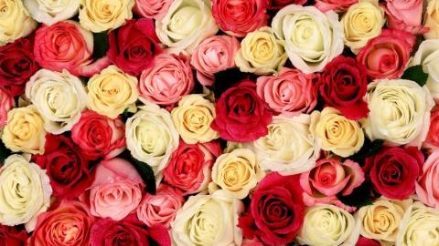 Администрация Балаковского района закупает 3,5 тысячи цветов