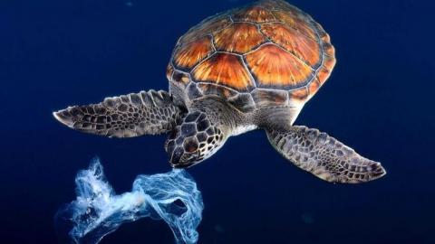 """В Саратове впервые пройдет международная фотовыставка """"Золотая черепаха"""""""