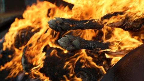 """Зоозащитница о крематории для бездомных животных: """"Мы спасаем собак, а власть предлагает их сжигать"""""""