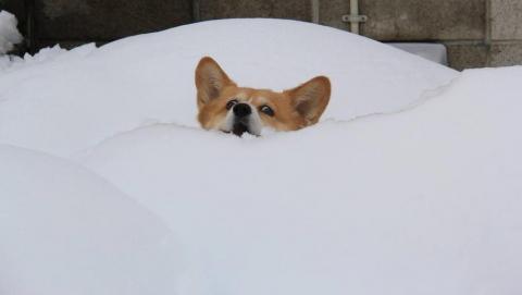 Саратовские синоптики предупреждают о снегопаде в воскресенье