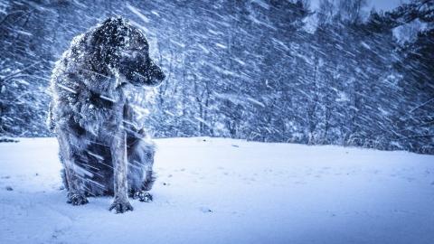 Саратовцев предупреждают о метели и снежных заносах