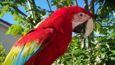 Жителей и гостей Саратова приглашают в большой зоопарк экзотических животных ZOO LAND