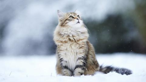 Саратовцам обещают морозную и снежную погоду