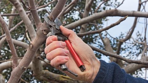 Посещение набережной ограничат из-за обрезки деревьев
