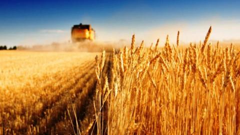 На Саратовском экономическом форуме обсудят агропродовольственный рынок