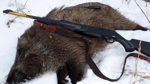 Под Саратовом задержаны браконьеры с тушей кабана