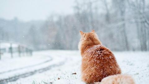 """Саратовцев ждет очередной """"весенний"""" морозный день"""