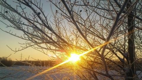 Сегодня в Саратовской области будет морозно и солнечно