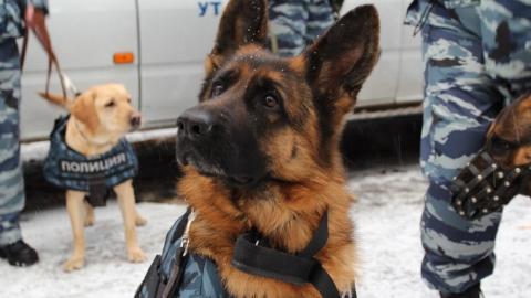 Собака Саманта помогла полицейским найти оружие и наркотики у сельчанина