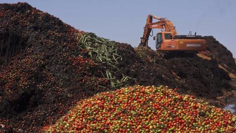 В Саратове уничтожено 790 килограммов турецких помидоров