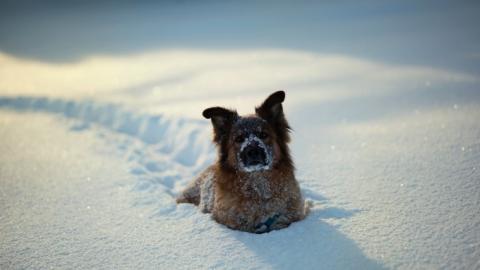 Синоптики обещают саратовцам снежную неделю