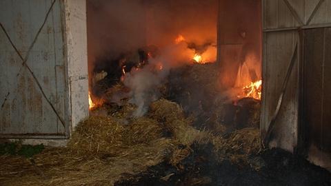 В Балашовском селе сгорел сарай с четырьмя телятами