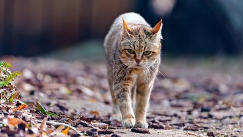 Под Саратовом из-за умершей кошки объявили карантин по бешенству