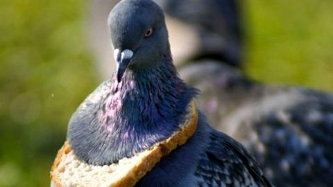 Вооруженный житель Хвалынска кормился убитыми собаками и голубями