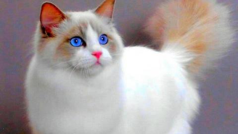 Саратовчанка купила в зоомагазине лишайного кота