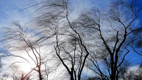 Саратовцев ожидает ветреный день