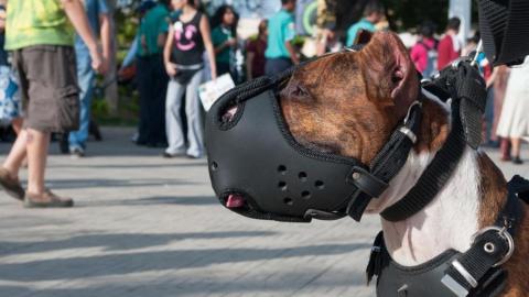 Депутаты предложили заматывать скотчем морды маленьких собак