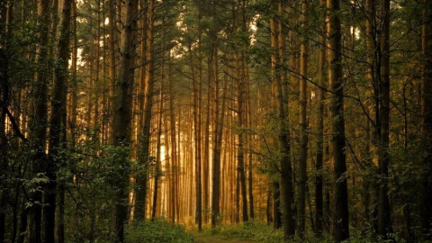 В Саратовском районе планировалось вырубить лес для выращивания грибов