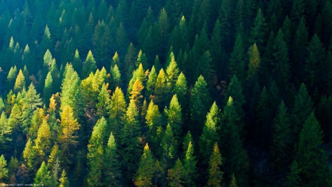 В Саратовской области восстановят 1200 га лесов