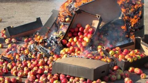 В Саратовской области уничтожили партию польских яблок