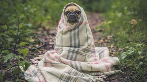 В выходные саратовцев ждут холодные ночи