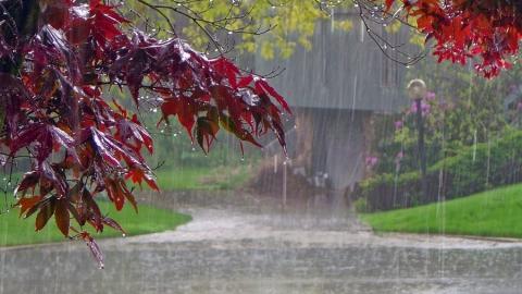 Сегодня по области обещают дождь с грозой