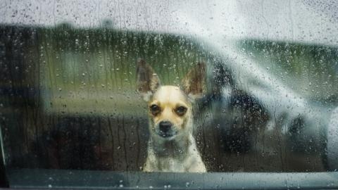 Саратовцев ждут дождливые и ветреные выходные