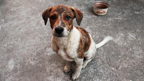 Губернатор потребовал усилить борьбу с бездомными собаками
