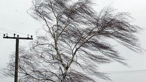 Саратовцев предупреждают об усилении ветра
