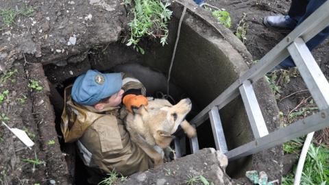 Спасатели вытащили пять провалившихся под землю собак