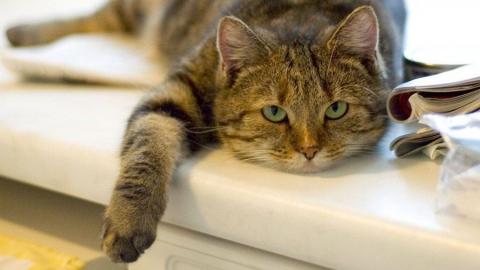 В области от бешенства привита 21 тысяча кошек