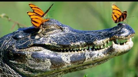 Саратовцев приглашают посетить крокодиловую ферму и самим покормить хищников