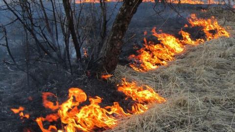 За апрель в области произошло 428 случаев возгорания травы