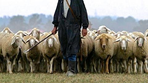 В Саратовской области фермер палкой убил пастуха