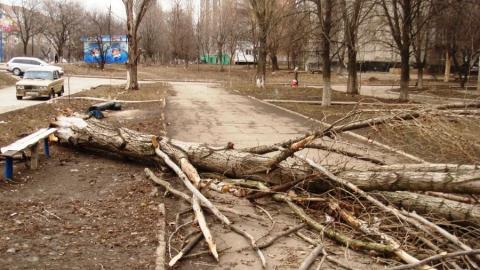 Вчерашний ветер повалил в Саратове 30 деревьев