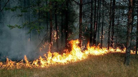 Минувшей ночью в области произошло два лесных пожара