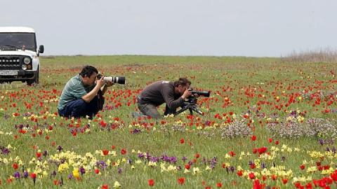 Фестиваль тюльпанов посетили 40 тысяч туристов