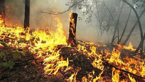Саратовцев предупреждают о высокой пожарной опасности