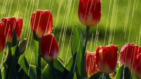 Сегодня синоптики обещают кратковременные дожди и грозы