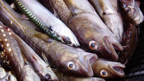 Трех рыбаков из Саратовской области задержали за игнорирование нерестового запрета