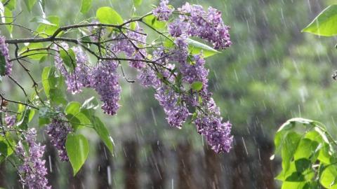 Синоптики ожидают сильный дождь с грозой