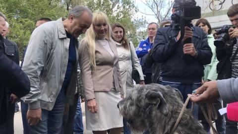 Губернатору показали единственного представителя ирландских волкодавов в Саратове