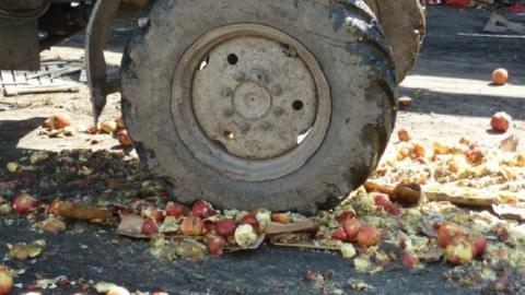 На Энгельсском полигоне уничтожено более полутора тонн польской груши