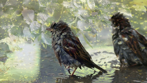 Синоптики вновь обещают дождь с грозой
