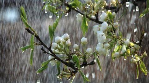 Сегодня по области возможен дождь, гроза и град