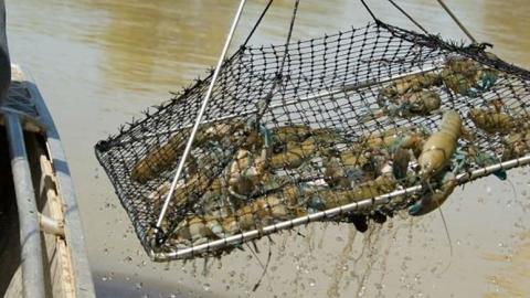 В Саратове задержаны безработные рыбаки