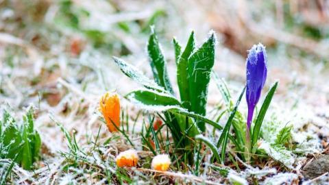 В Саратове ожидаются заморозки в выходные