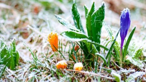 Синоптики предупреждают о ночных заморозках до -2 градусов